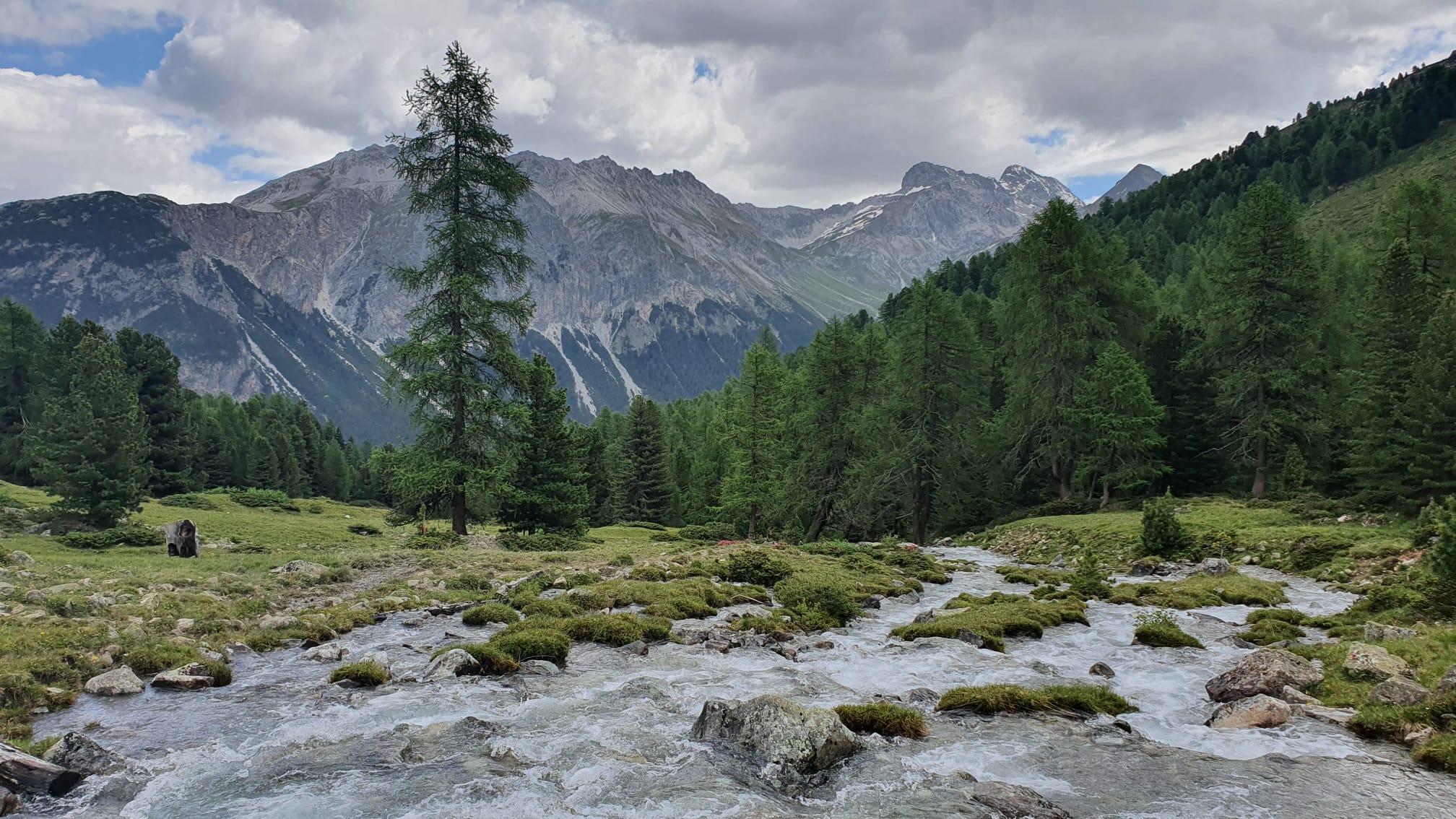 21-08-15-Bergün-Alp Mulix
